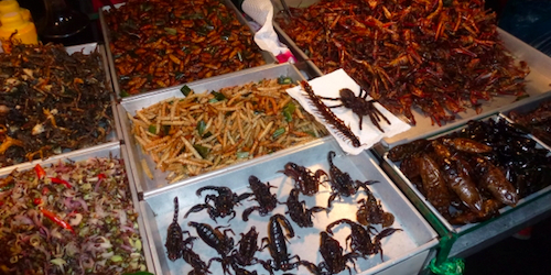 Fried and crunchy edible bugs.