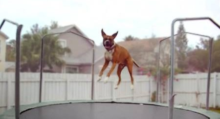 Dog on Trampoline
