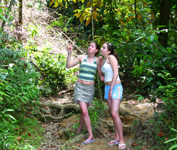 Tobago Rainforest Girls