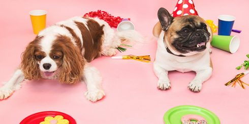 Party like a dog - National Dog Day