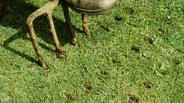 lawn care - aeration - DIY
