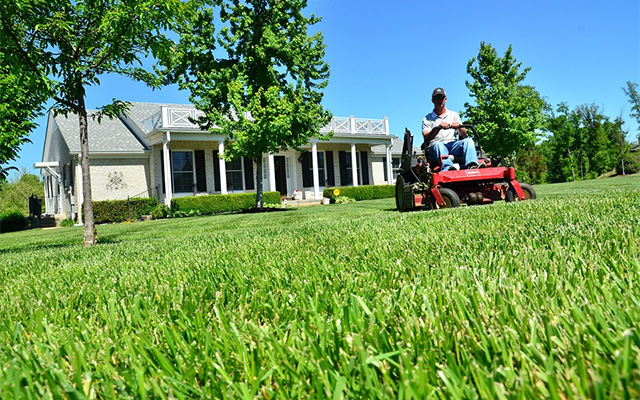 Maintain your lawn in the spring