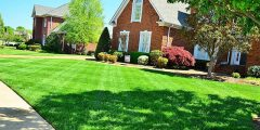 perfect summer lawn care