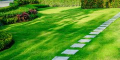 Maintain your lawn in the summer