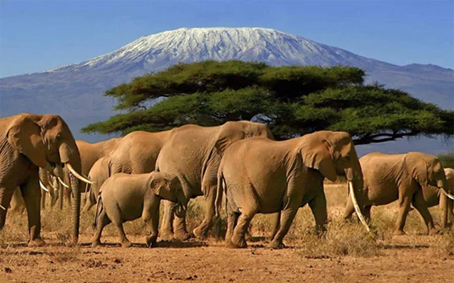 sunny destinations - safari kilimanjaro