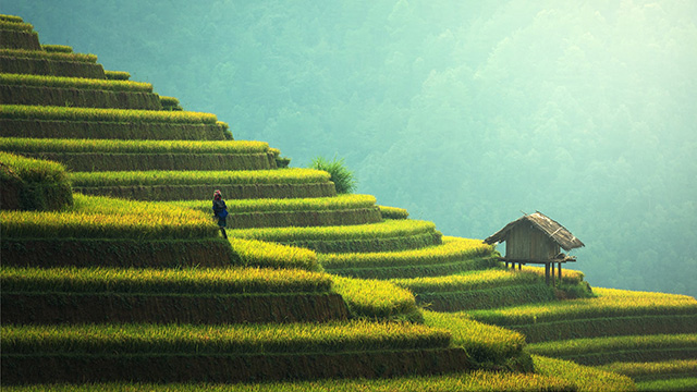 terraced rice paddy southeast asia