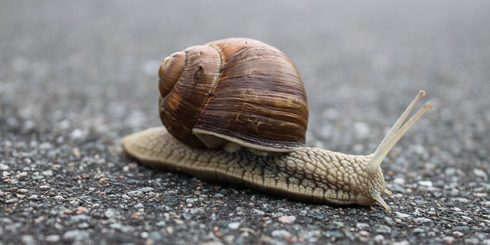 snail slowing